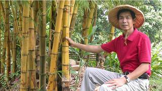 BBC记者来鸿:台湾竹业为何能浴火重生?