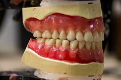Denture (Franki Blaise) Tags: teeth fake dental dentist dentistry false removable falseteeth dentures denture