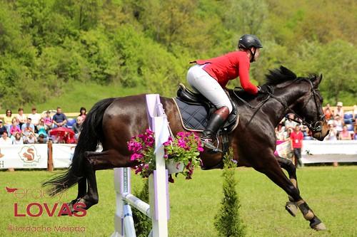 """Transylvania Horse Show 2014 - Díjugratók • <a style=""""font-size:0.8em;"""" href=""""http://www.flickr.com/photos/95148802@N02/13918342879/"""" target=""""_blank"""">View on Flickr</a>"""