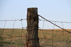 Don't Fence Me In (Diane Marshman) Tags: old sky tree field rural fence wire post farm horizon country pasture trunk setting