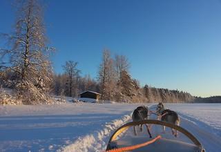 Chiens de traîneau près de Lentiira (Suomi - Finlande)