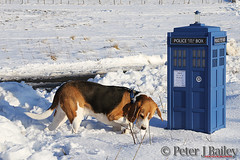 Tardis and Basil the Beagle (Peter J Bailey - Saxon Studio) Tags: dog beagle scale canon photography wooden model handmade who dr hound tardis peterjbailey