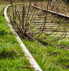 On Track (trishp97) Tags: railroad urban vancouver train traintracks tracks brambles