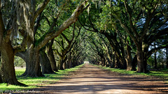 Evergreen Plantation road (mcandrus) Tags: road saint parish john river mississippi landscape oak louisiana evergreen plantation baptist lined edgard