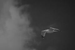 IMG_5109 (photo.bymau) Tags: sea mer beach saint canon boat grande seaside marine turquoise tide side marin bretagne 7d cote bateau paysage plage barrage rennes malo dinard emeraude rance mare cezembre ecluse bymau