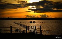 Atardecer en la laguna dorada (misabelaguileralopez) Tags: espaa contraluz atardecer golden sevilla spain agua seville laguna goldenhour dorado dehesa dehesadeabajo puebladelrio horadorada