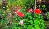 20150822_143433 (Megaolhar) Tags: flores toy flickr do dia vale paulo apa bom inverno são campos facebook tuka jordão paraíba fazendinha 2016 youtube ibama twitter jardinagem bioma gomeral