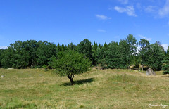 Tracing the past (DameBoudicca) Tags: tree ruins sweden schweden ruin ruine ruinas rbol sverige  albero arbre baum trd suecia ruiner rovine sude  svezia  sanden frredastoregrd backstuga frreda