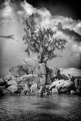 ocean tree (seleznevyuriy) Tags: leica m seychelles