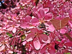 Spring II (Alexandr Tikki) Tags: world life street new city morning travel pink flowers original trees light wild portrait sun holiday plant flower macro tree art classic love nature beautiful beauty wow wonder happy idea fly spring amazing cool nice fantastic flora perfect holidays europe moments heaven view image time outdoor good earth top unique magic awesome great creative dream young may ukraine best journey hero imagine imagination unusual concept moment minimalism inspire incredible impressive happines iphone tikki slavutich alexandrtikki