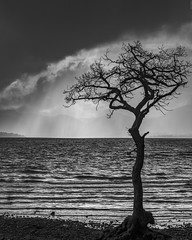 Approaching (Images by William Dore) Tags: uk trees blackandwhite wet water monochrome rain weather landscape outside outdoors mono scotland blackwhite nationalpark nikon sunshower lochlomond lochs d810 nikond810
