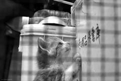 9289 (A-yamabeno) Tags: cat kitten  straycat   monochrome   blackandwhite