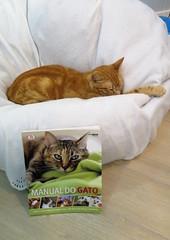 Aqui H Gato - May'16 (29) (Silvia Inacio) Tags: cats portugal cat book lisboa lisbon tabby gatos gato livro catscafe baguete aquihgato