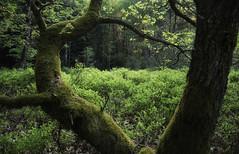 Summer Lightning (creyesk) Tags: sunset summer tree green curves