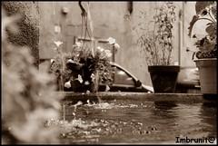 schizzi (imma.brunetti) Tags: acqua pietra fontana viterbo lazio pianta bolle