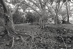 (Ana Eversbusch) Tags: blancoynegro landscape blackwhite ghost roots paisaje soledad fantasma solitario abandono raices casaabandonada tenebroso canoneos5dmkii anaeversbusch