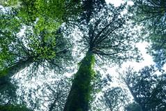 Yakushima #2 (k_t) Tags: green forest cedar yakushima mossy yaku
