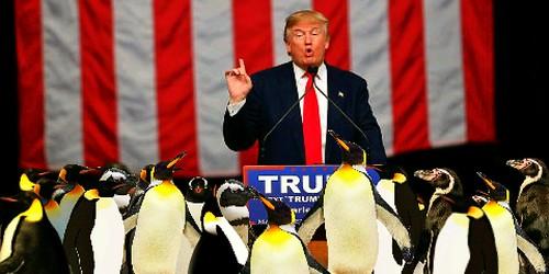 Trump, From FlickrPhotos