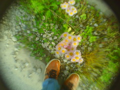 season of flowers (-ICHIRO) Tags: street camera lens toy wide snap ez yashica f525