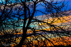 Spectrum Dusk (mikederrico69) Tags: blue sunset sky orange tree nature dark spring colorful dusk scene silouhette