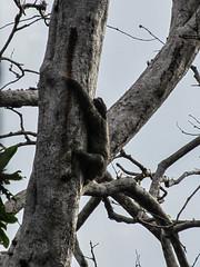 """Bocas del Toro: l'île aux Paresseux (bis) <a style=""""margin-left:10px; font-size:0.8em;"""" href=""""http://www.flickr.com/photos/127723101@N04/27300264196/"""" target=""""_blank"""">@flickr</a>"""