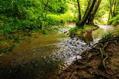 Leigh Brooks, Riffle Pools and Glides (Macro light) Tags: islands wildlife trust worcestershire channel leighbrook theknapp riffleandpool waterwaterscapesummermid