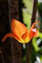 Magical flower - Fleur magique (Sbastien Vermande) Tags: france flower macro fleur spring bokeh lot printemps macrolens macrophotography midipyrnes macrophotographie canon7d sigmaapoteleconverter14xexdg sigma150macroexdg vermande