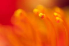 I Will Not Let Anything Take Away (Thomas Hawk) Tags: sanfrancisco goldengatepark usa flower deyoungmuseum museum unitedstates fav50 unitedstatesofamerica deyoung fav10 fav25 bouquetsdeart2010