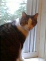 Maxx (bjustice4) Tags: cute cat kitten windowsill maxx