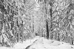 12/2/2016... (tiagoelidio) Tags: park parque trees winter snow germany bayern deutschland bosque neve inverno alemanha rvores baviera 366 nationalparkbayerischerwald bavria project366 366project