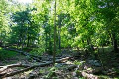 Tree lines (kzoop) Tags: park trees newyork tree nature outdoor hiking hike bearmountain manual 12mm bearmountainstatepark samyang applachiantrail