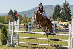 DSC01147_s (AndiP66) Tags: springen auffahrtspringen auffahrt wolfwil solothurn 2016 mai may 5mai2016 pferd horse schweiz switzerland kantonsolothurn cantonofsolothurn concours wettbewerb horsejumping springreiten pferdespringen equestrian sports pferdesport sport martinameyer grueb wolhusen luzern sony sonyalpha 77markii 77ii 77m2 a77ii alpha ilca77m2 slta77ii sony70400mm f456 sony70400mmf456gssmii sal70400g2 andreaspeters ch