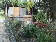 Acone_e-m10_1005065264 (Torben*) Tags: italien italy garden tuscany garten toskana acone rawtherapee olympusm1442mmf3556iir olympusomdem10