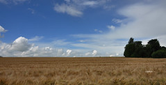 Aprs l'averse (Vootch) Tags: ciel nuage paysage campagne extrieur champ bl
