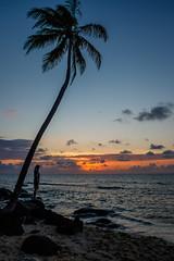 Nicaragua-40 (s4rgon) Tags: beach cornisland insel karibik nicaragua palm palme strand regiónautónomadelatlántico regiónautónomadelatlánticosur ni
