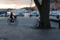 Mind the tree! - Stockholm (Romain Fontaine) Tags: street tree bike 35mm 50mm sweden stockholm 18 dx d5200