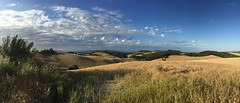 Tuscany (Iola Welsh) Tags: italy nature landscapes countryside europe tuscany cornfields rollinghills