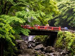 P1020767 (MIKIMONTE) Tags: bridge japan forest waterfall  osaka jap mino cascada