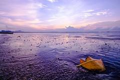 IMG_3561 ~ daun kering di tepi pantai (achem74) Tags: balok beserah kuantan pahang malaysia travel places trip canon eos eos700d canoneos700d canonlens 10mm18mm wideangle efs10mm18mm sunrise beach