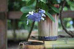 (memories of time) Tags: japan kitakamakura kamakura kanagawa flower well color temple hydrangea