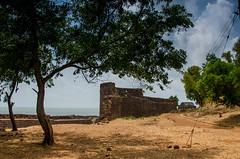 Wall ruins of Vijaydurg Fort (keyaart) Tags: trees nature fruit fort konkan vijaydurg