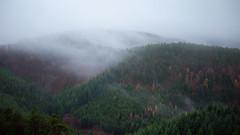 Dark forest (.Stevve) Tags: forest trekking dark de deutschland cloudy wald dunkel rheinlandpfalz wolkig edenkoben