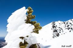 Yeti Treehugger (newmexicorob) Tags: sky mountain snow tree hiking windblown
