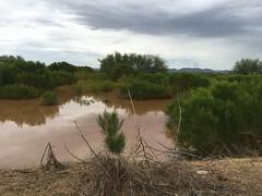 IMG_9390 (Mesa Arizona Basin 115/116) Tags: basin 115 116 basin115 basin116 mesa az arizona rc plane model flying fly guys flyguys