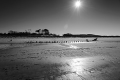 Memories from Sand (Torsten Reimer) Tags: trees sky blackandwhite usa sun seascape beach strand boot boat us sand unitedstates massachusetts unitedstatesofamerica himmel shipwreck northamerica ipswich schwarzweis ipswichbay