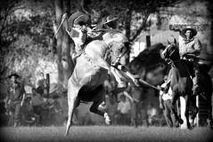 Presentando armas (Eduardo Amorim) Tags: brazil horses horse southamerica criollo caballo uruguay cheval caballos cavalos pferde cavalli cavallo cavalo gauchos pferd hest hevonen chevaux gaucho  amricadosul hst uruguai gacho  amriquedusud  gachos  sudamrica suramrica amricadelsur  sdamerika crioulo caballoscriollos criollos jineteada   cerrolargo americadelsud gineteada  crioulos cavalocrioulo americameridionale caballocriollo eduardoamorim cavaloscrioulos  pasodeldragn plcidorosas