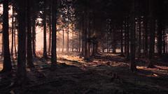 Misty Forest Lights (Netsrak) Tags: trees light shadow red mist tree rot nature fog forest de landscape deutschland moss haze woods nikon nebel outdoor natur landschaft wald bume baum nordrheinwestfalen moos dunst forst badmnstereifel d3200