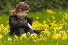 IMG_1571 (kevaruka) Tags: derbyshire statelyhome countryhouse hardwickhall mayflowers ilobsterit