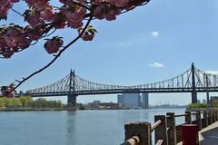 Ed Koch Queensboro Bridge (gigi_nyc) Tags: nyc lighthouse queens queensborobridge rooseveltisland longislandcity smallpoxhospital rooseveltislandtram bigallis strecker fourfreedomspark