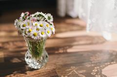 Bnui (Theria) Tags: stilllife sun sunlight floor curtain daisy bouquet dasybunch